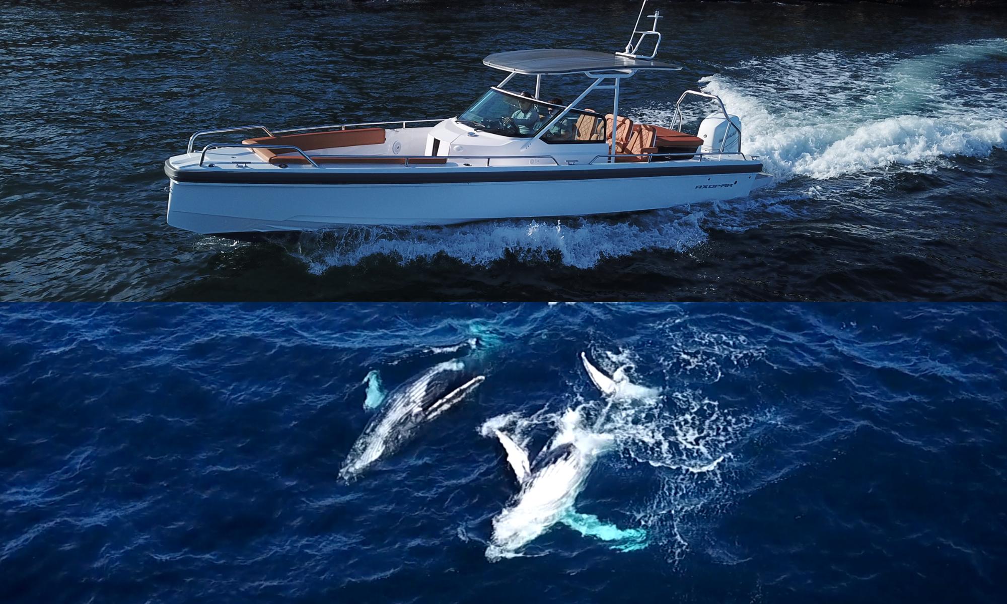 Whale watching onboard Axopar 28